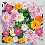 Fiori colorati omaggio da MCDonald's (solo lunedì 3 aprile)