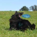 Concorso Galbacotto tacchino vinci frisbee