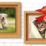 Quadretto Tonki con la foto del tuo cane premio sicuro Royal Canin